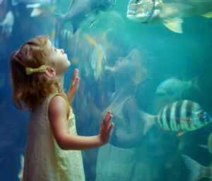 child aquarium